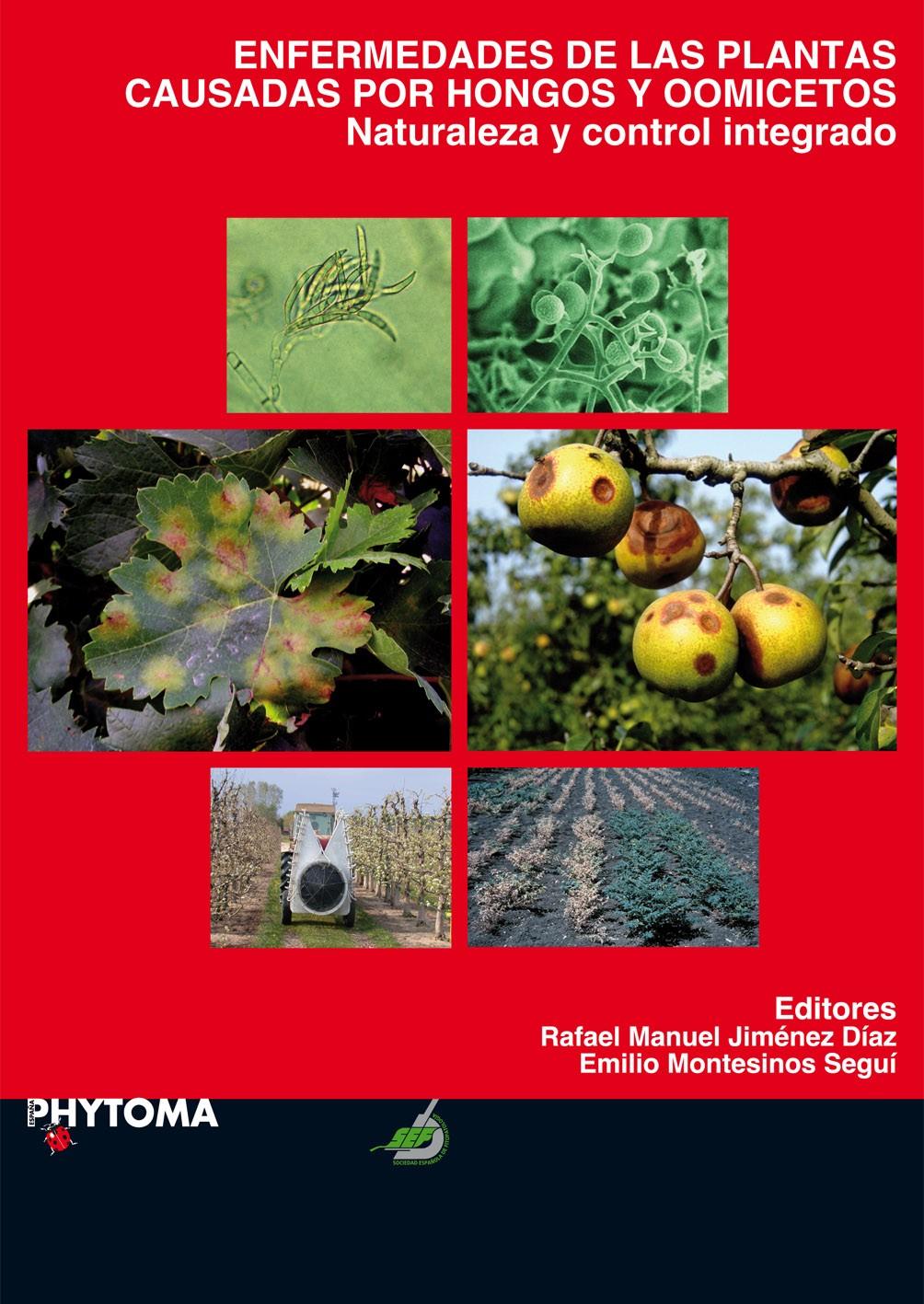 enfermedades producidas por hongos mas comunes